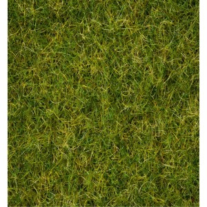 "Grass Blend  ""Summer Meadow"""