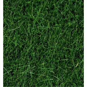 Wild Grass Dark Green